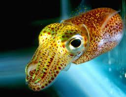 118 best octopus squid cuttlefish u0026 jellyfish images on