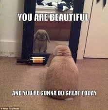 Mirror Meme - keep walking this doesn t concern you meme collection features