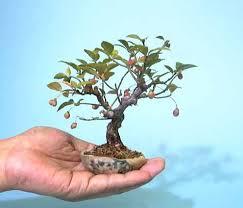 70 best tiny trees images on miniature trees