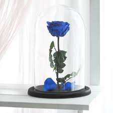 beauty and the beast rose large belle rose forever blue