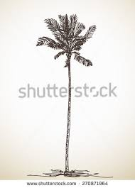 sketch palm tree hand drawn illustration stock vector 270871964
