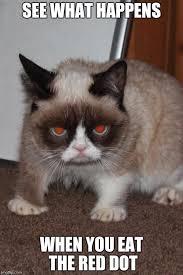 Cat Meme Maker - disappointed cat meme generator mne vse pohuj