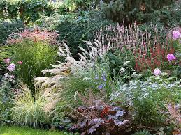 81 best ornamental grasses images on ornamental
