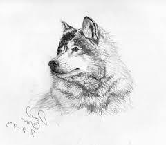 beautiful pencil sketch animals drawing of sketch