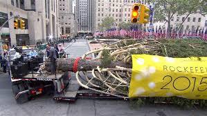 rockefeller center christmas tree arrives on the plaza has deep