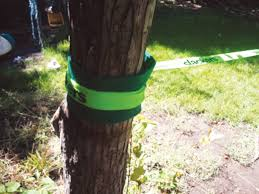 slackers tree huggerz tree protector kit slackers