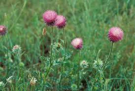 native plant network problem plant control missouri department of conservation