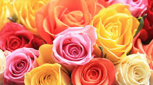 Red Color Meaning Meaning Of Yellow Orange Lavender Color Roses In Which