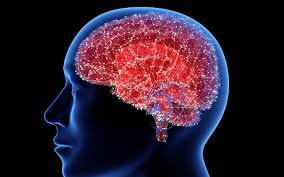 Brain Mapping Updated Brain Cell Map Connects Various Brain Diseases To Specific