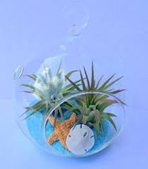 air plant orb hanging terrarium clear glass beach theme 4 5