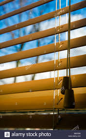 wooden window blinds and toggle pull looking out at tree and a