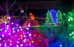 National Zoo Lights by Point Defiance Walrus E T Immortalized