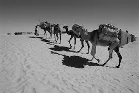 regional study trans saharan trade