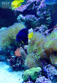 reef bar aquarium services inc we serve nyc nj u0026 long island
