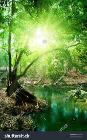 deep forest green deep forest stock photo 27050518 shutterstock