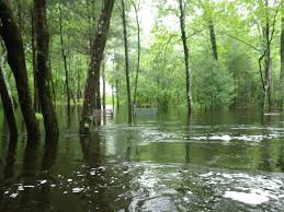Rhode Island Forest images Paddle across rhode island maybe next year northern forest jpg