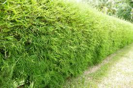 garden design garden design with planting bamboo wall stock photo