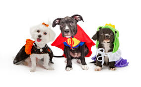 2015 halloween doggie daycare party and costume contest
