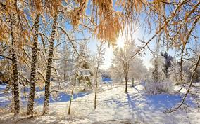 beautiful winter day nature revives