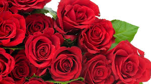 wallpaper flower red rose red rose flowers wallpapers hd one hd wallpaper pictures