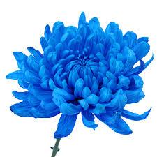 blue flower cremon bulk flowers