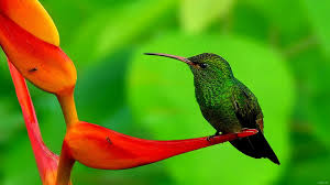 beautiful birds wallpapers hd pictures u2013 one hd wallpaper pictures