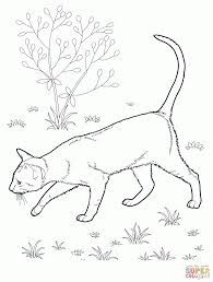 download coloring pages coloring pages cats coloring pictures