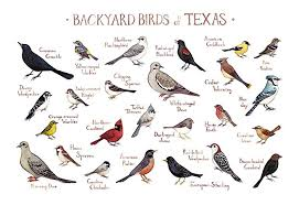 Texas birds images Backyard birds of texas field guide art print handmade jpg