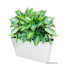 see these self watering planter options and ideas