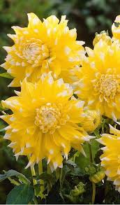 255 best hello yellow images on pinterest yellow yellow