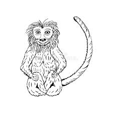 hand draw a monkey in the style of a sketch on a stock vector