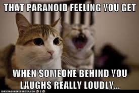 Awkward Cat Meme - lolcats paranoid lol at funny cat memes funny cat pictures