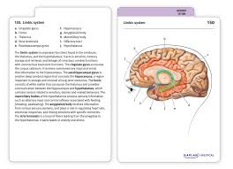 anatomy flashcards joanne tillotson stephanie mccann