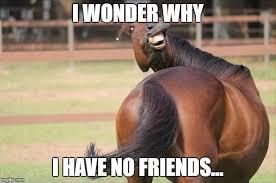 Meme Horse - funny horse latest memes imgflip
