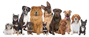 Types Of Dogs Delray Beach Steps In It With Puppy Sale Regulations Florida