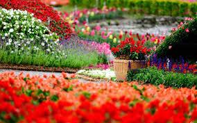 top 10 beautiful garden wallpaper hd of flower garden