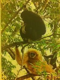 Weeeeeeeeeee Weeeeeeeeeee Picture Of Flight Of The Gibbon Chiang Mai
