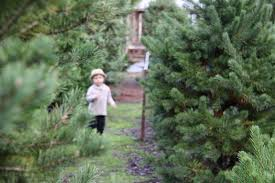 why you should take holland to the christmas tree farm mallorie