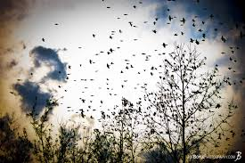 buy birds on tree flying away photo print options