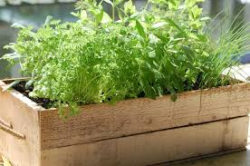 decoration best planters for herbs indoor herbs herb boxes for