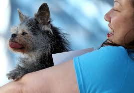 worlds ugliest color ugly dog contest winner 2017 people com