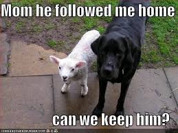 Black Lab Meme - dog pictures picmia