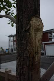 how to repair tree bark damage