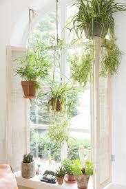 White Bedroom Plants 118 Best Un Coin De Verdure Images On Pinterest Plants