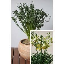 Tropical Fragrant Plants - garden design garden design with indoor tropical plants danasokc