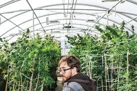 high hopes modern farmer