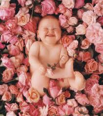 anne geddes the photographer who put babies in flower pots is