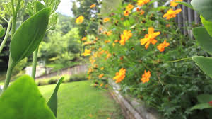 perennial garden vegetables perennial vegetable beds with edible yard and garden youtube