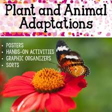 plant and animal adaptations activities graphic organizers and