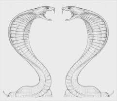 king cobra sketches sketch coloring page